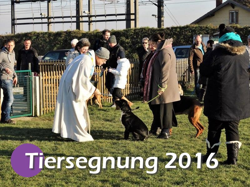 Tiersegnung 2016 (25)